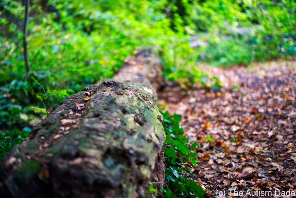 A fallen log