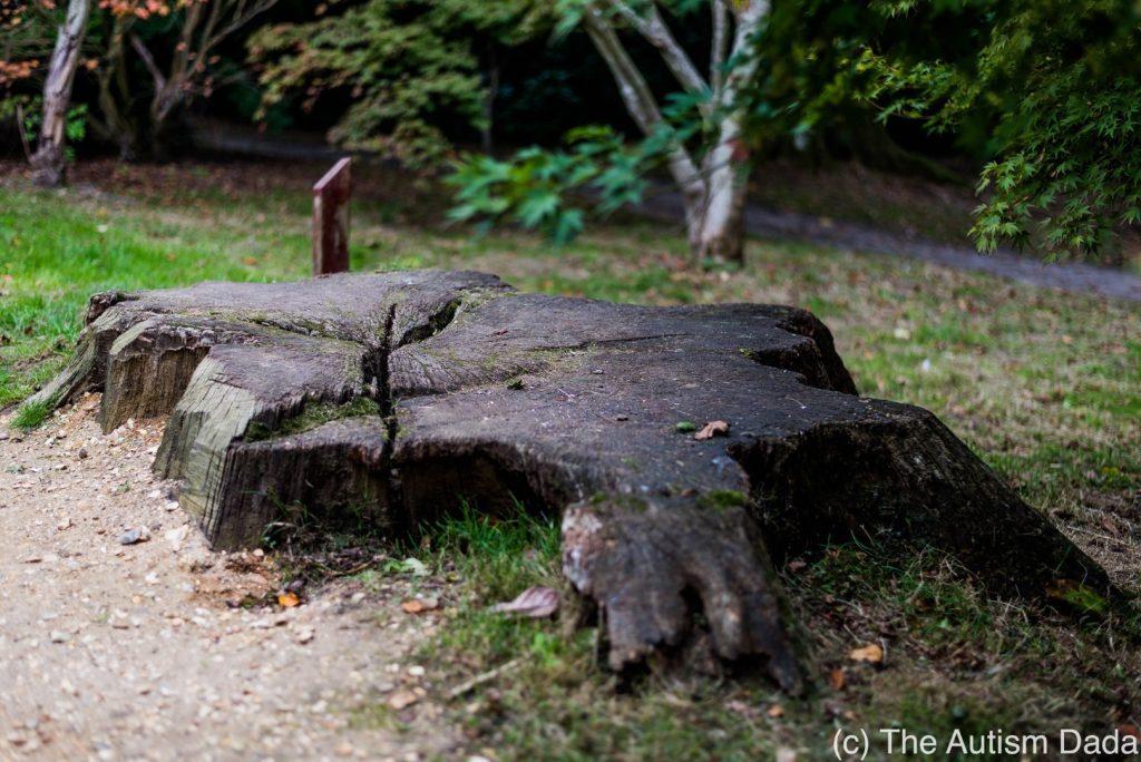 The Felled Tree