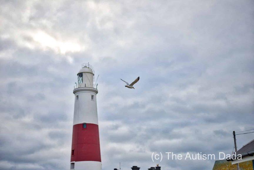 Portland Bill Visit - Seagull Flying
