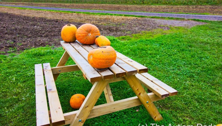 Picking the right pumpkin for Halloween