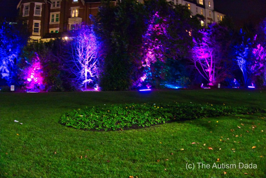 Light Up Bushes