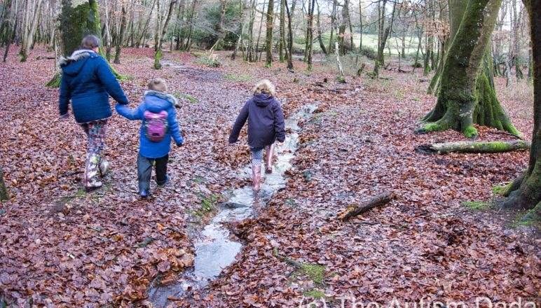 New Forest walk on New Years Day 2018