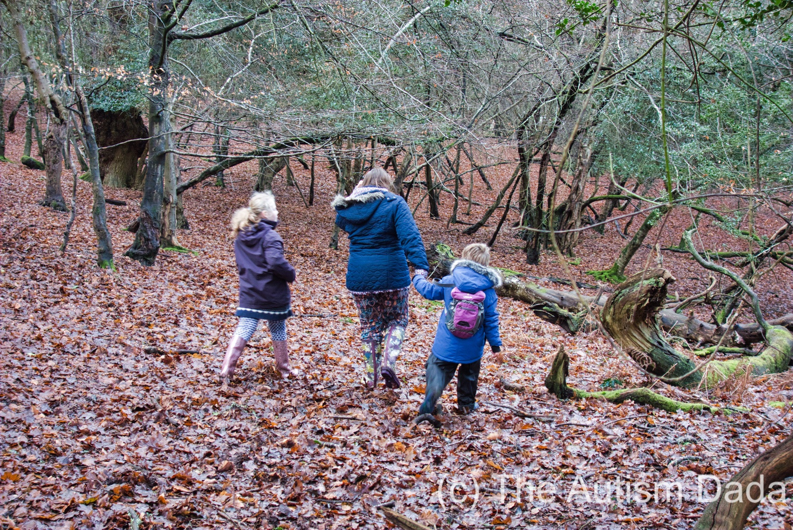 New Forest New Years Day 2018