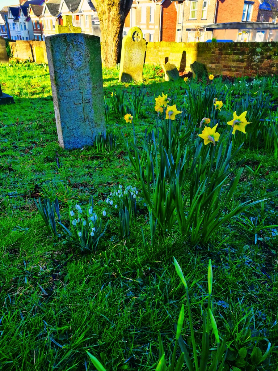 Daffs Are Out